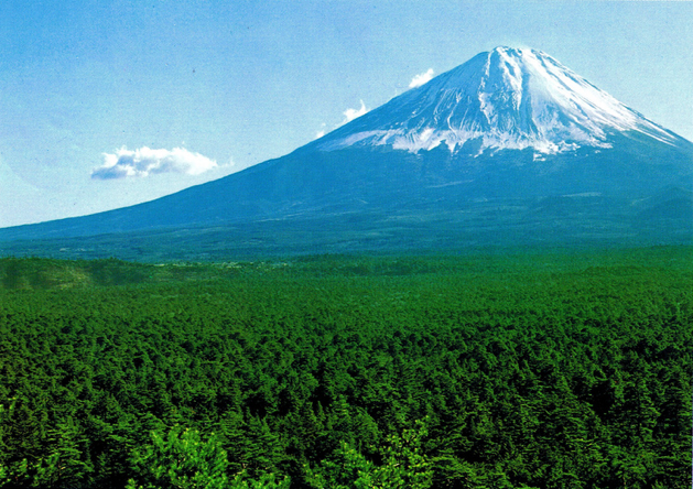 http://www.alleraujapon.fr/wp-content/uploads/2010/10/aokigahara.png